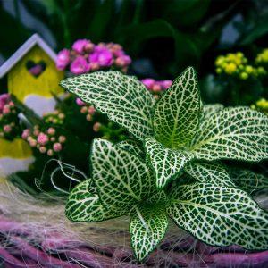 Cesta con plantas decorada con suculentas amarillas rosas disponibles para comprar online en la Floristería Yerba