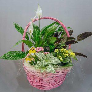 Cesta de plantas como lirios, fittonia verschaffeltii y con decoración en Floristería Yerba
